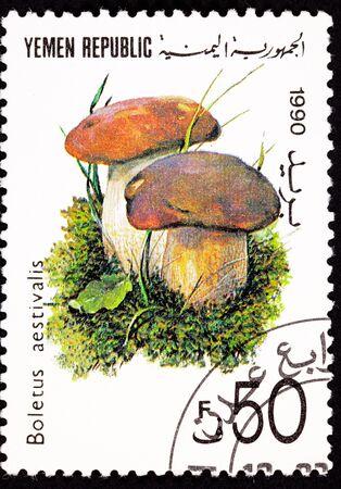 reticulatus: Edible Summer Cep mushroom, Boletus reticulatus.   Formerly Boletus aestivalis Stock Photo