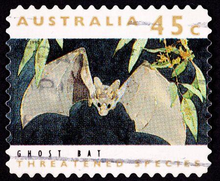 echolocation: Ghost Bat Macroderma gigas  Also known as the False Vampire Bat Stock Photo