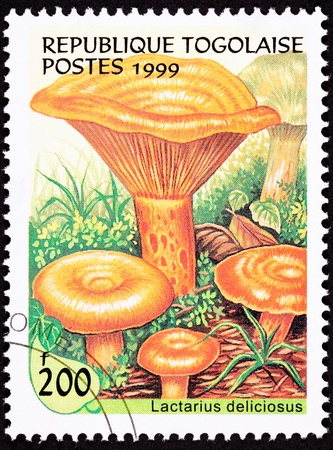 Edible Saffron Milk Cap mushroom, Lactarius Deliciosus.  Also known as the Red Pine mushroom. Reklamní fotografie