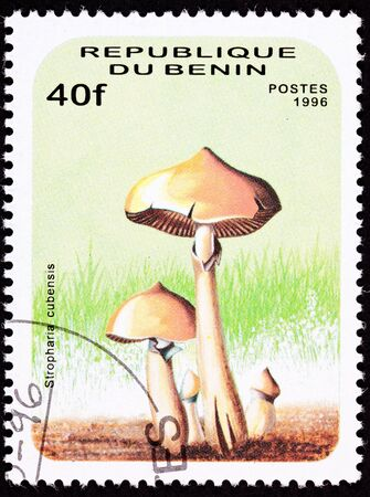 psilocybin: Psilocybin mushroom, Psilocybe cubensis, formerly Stropharia cubensis.   Psychedelic mushroom