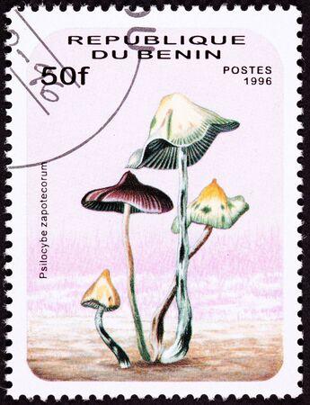 psilocybin: Psilocybin mushroom Psilocybe zapotecorum .   Psychedelic mushroom.  Looks like it was drawn by Dr. Seuss.