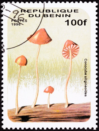 dr: Psychedelic Mushroom, Conocybe siligineoides.  Looks like it was drawn by Dr. Seuss.