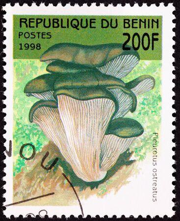underbelly: Pleurotus ostreatus, Pleurotus ostreatus.  Frequentemente cresce sui lati degli alberi.  Contiene statine naturale, cos� pu� abbassare il colesterolo.  Pu� anche essere utilizzato per mycoremediation Archivio Fotografico