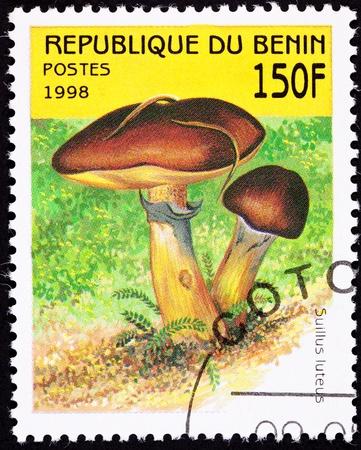 Edible Slippery Jack Mushroom, Suillus luteus, also known as the Sticky Bun mushroom. Stok Fotoğraf - 9005138