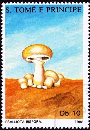 button mushroom: Edible Button Mushroom,  Agaricus bisporus, formerly Psalliota bispora.  Also known as the Common mushroom, White mushroom, Table mushroom, Cremini mushroom, Swiss brown mushroom, Roman brown mushroom, Italian brown mushroom