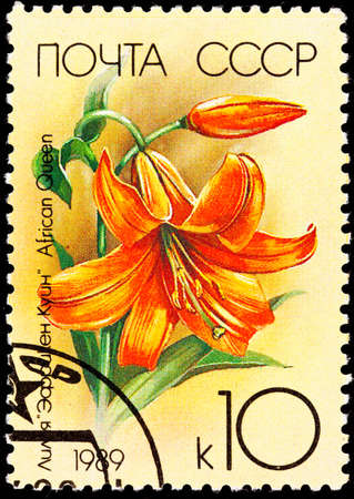 commemorative: Orange Lily, African Queen Stock Photo