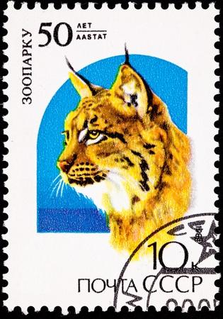 ヨーロッパオオヤマネコ オオヤマネコ lynx です。エストニア、タリン動物園の創立 50 周年記念のスタンプです。Lynx は動物園で動物の最初のタイプ 写真素材