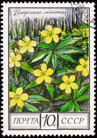 commemorative: Yellow buttercups from the Ranunculus family in an oak forest.