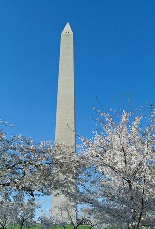 Cherry Blossom at the Washington Monument, Washington, DC, United States. Stock Photo - 9273336