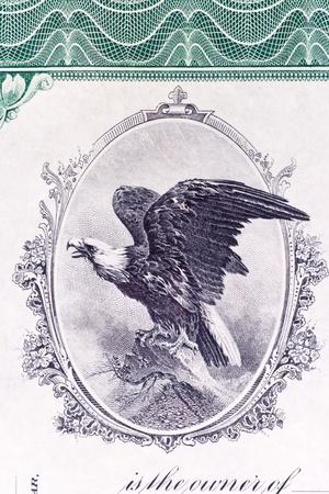 stock certificate: Primer plano de un �guila calva en un certificado de acciones de EE.UU. emiti� en 1911.