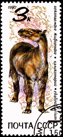 horse like: USSR- CIRCA 1990:  A stamp printed in the USSR shows a Chalicotherium, a family of horse like animals that lived 8 to 16 million years ago, circa 1990. Stock Photo