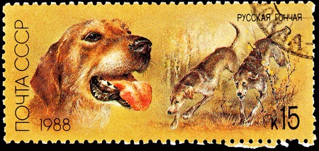 franked: USSR- CIRCA 1988:  A stamp printed in the USSR shows several Russian Retrievers hunting through brush, circa 1988.