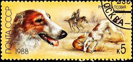 franked: USSR- CIRCA 1988:  A stamp printed in the USSR shows a Russian Wolfhound, also known as Borzoi, killing a red fox with hunter on horseback, circa 1988.
