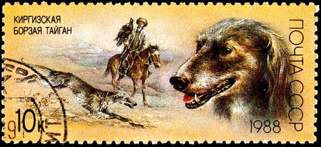 franked: USSR- CIRCA 1988:  A stamp printed in the USSR shows a Taigan Kirghiz dog in traditional hunt with a Golden Eagle and Kyrgyz man, circa 1988. Stock Photo