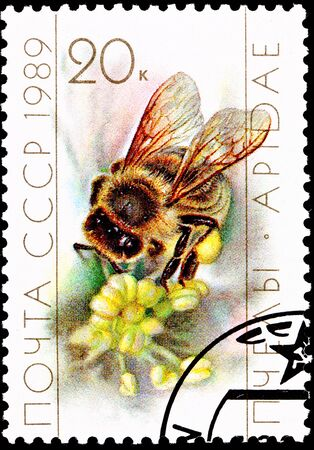 bee on flower: USSR- CIRCA 1989:  A stamp printed in the USSR shows a worker bee collecting pollen from a flower, circa 1989. Stock Photo