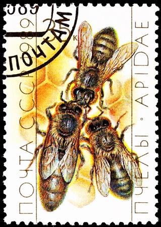 abeja reina: URSS-alrededor de 1989: Un sello impreso en la URSS muestra una abeja reina con dos z�nganos en nido de abeja, alrededor del a�o 1989. Foto de archivo