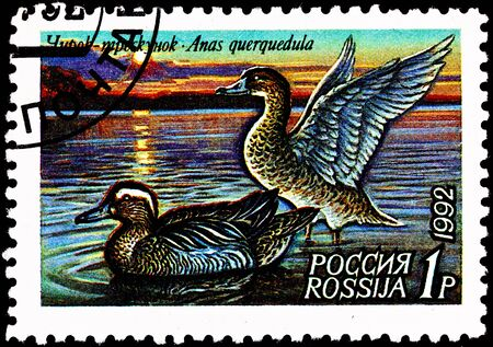 franked: RUSSIA - CIRCA 1992:  A stamp printed in Russia shows a pair of Garganey ducks, Anas auerquedula, on a lake, circa 1992.