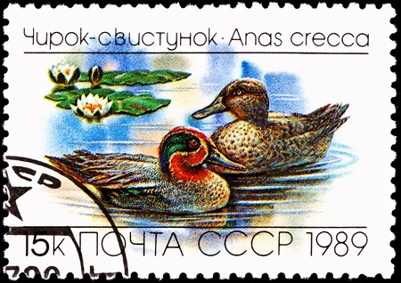 eurasian: USSR- CIRCA 1989:  A stamp printed in the USSR shows the Eurasian or Common Teal, Anas crecca, floating on a lake, circa 1989.