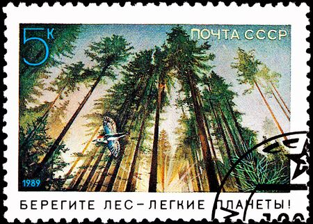 though: USSR- CIRCA 1989:  A stamp printed in the USSR shows a woodpecker flying though a forest as morning sun streams between trees, circa 1989.