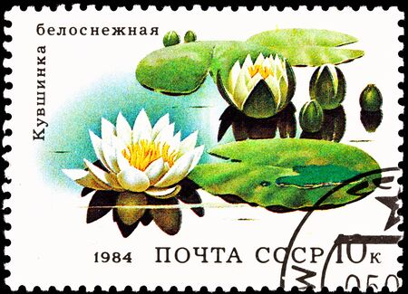 USSR- CIRCA 1984:  A stamp printed in the USSR shows the European White Waterlily, Nymphaea alba, also known as the White Lotus, circa 1984. Zdjęcie Seryjne