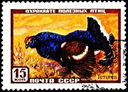 franked: USSR- CIRCA 1957:  A stamp printed in the USSR shows a Black Grouse, Tetrao tetrix in a field.  Also known as Blackgame, circa 1957. Stock Photo