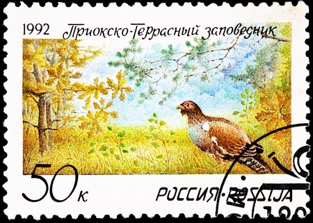 franked: RUSSIA - CIRCA 1993:  A stamp printed in Russia shows a pheasant in the Prioksko-Terrasny Nature Reserve, which is south of Moscow, circa 1993. Stock Photo