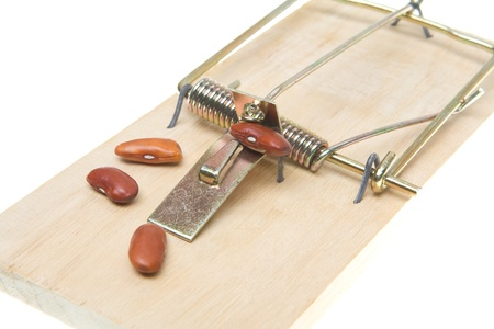 baited: Mouse trap baited with several beans.  Its a trap to catch accountants.
