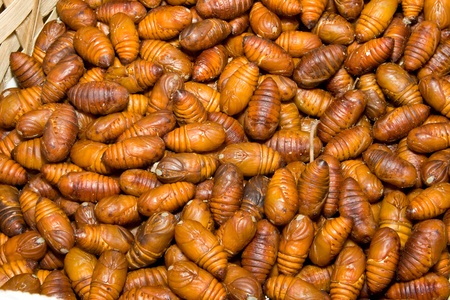 pupae: Close-Up Heap of Silkworm Pupae Larva, Cocoon has been removed.  Insects were in Shanghai pet market sold as food for birds and humans Stock Photo
