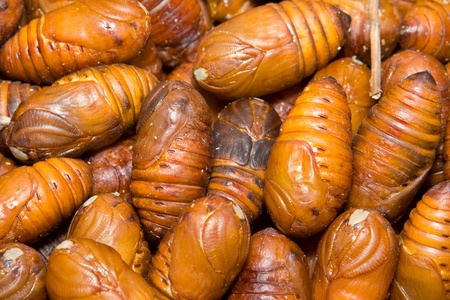 pupae: Full Frame Close-Up Heap of Moth Pupae Larva, Cocoon has been removed.  Insects were in Shanghai pet market sold as food for birds and humans
