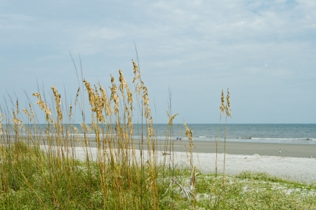 Beach with sea oat dune grass in foreground and Atlantic Ocean behind.  Hilton Head Island, South Carolina.