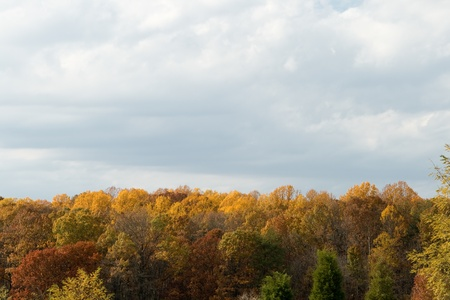 Autumn shot of fall red and yellow leaves against a gray sky Stock Photo - 11397491
