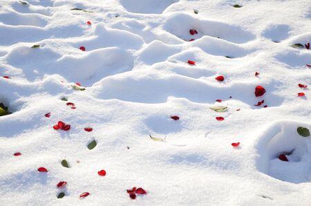 snow ground: Snow ground with flower petals