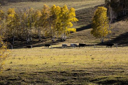 grasslands: Bashang grasslands
