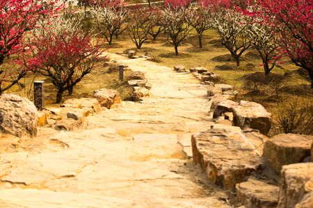 stone road: Plum blossom and stone road