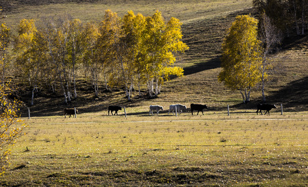 hebei province: The grassland of Hebei Province, China