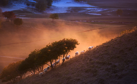 hebei: The grassland of Hebei Province, China
