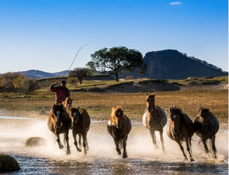 mongolia horse: The grassland of Hebei Province, China