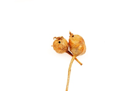 Dried wild fruits on a white background, filmed in the studio  photo