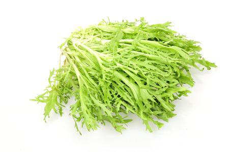 agronomic: Lettuce on a white background   Stock Photo
