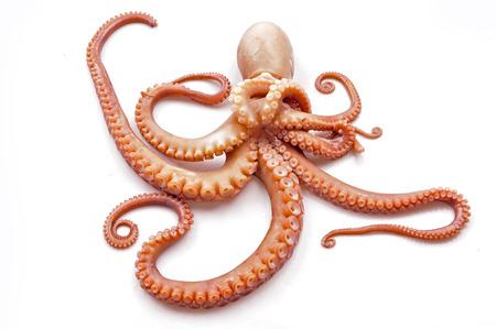 Octopus sur un fond blanc Banque d'images