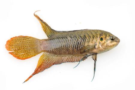 White background on the beautiful fish photo