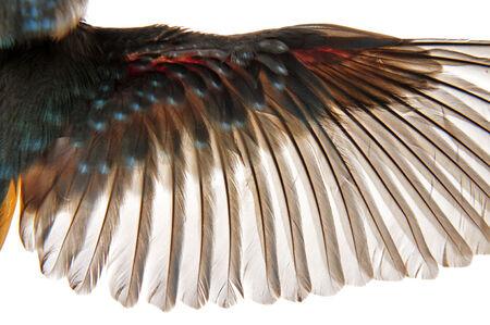 penas de um pássaro em um fundo branco, close-up fotos