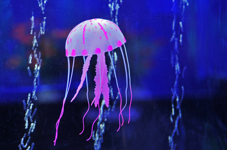 aquatic products: The beautiful jellyfish, taken in tangshan phoenix flower market  Stock Photo