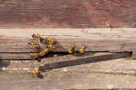 蜂 写真素材