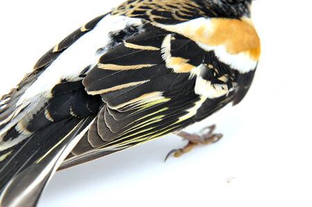 passerine: Passerine bird