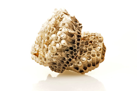 joint effort: Honeycomb on a white background
