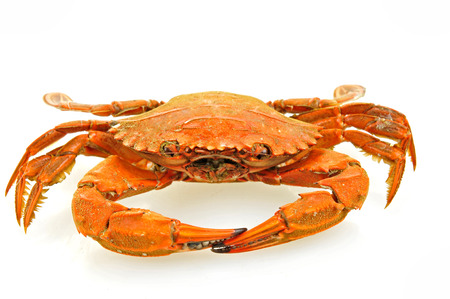 A crab on a white background Stock Photo