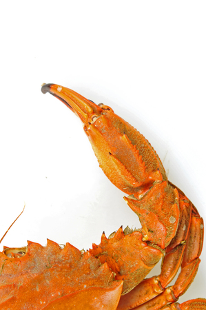 decapods: A crab on a white background Stock Photo