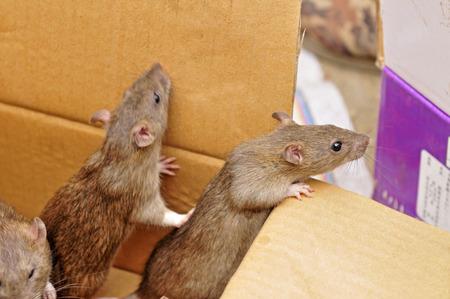 furtive: Cute little hamster