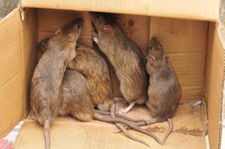 hamsters: Cute little hamster